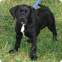 Adopt A Pet :: Daley - Pleasant Plain, OH