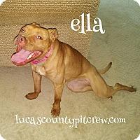 Labrador Retriever/Boxer Mix Dog for adoption in Toledo, Ohio - Ella