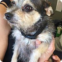 Adopt A Pet :: Vinny - Matawan, NJ