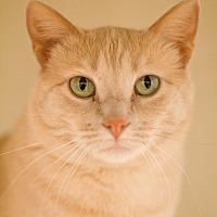 Adopt A Pet :: Roma - Grayslake, IL