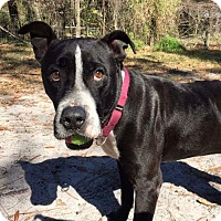 Adopt A Pet :: Major - Umatilla, FL