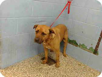 German Shepherd Dog Mix Dog for adoption in San Bernardino, California - URGENT on 4/4 SAN BERNARDINO