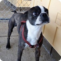 Adopt A Pet :: Buster - Monte Vista, CO