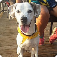 Adopt A Pet :: Chelsea - Ft. Lauderdale, FL