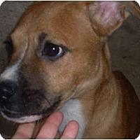 Adopt A Pet :: Keagan - Allentown, PA