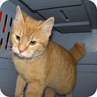 Adopt A Pet :: Fee - Jacksonville, FL