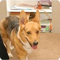 Adopt A Pet :: Buster - Murfreesboro, TN