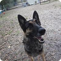 Adopt A Pet :: Mickey - Green Cove Springs, FL