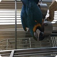 Adopt A Pet :: Willow - Punta Gorda, FL