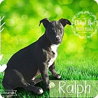 Adopt A Pet :: Ralph - West Hartford, CT