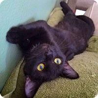 Adopt A Pet :: Carol - Irvine, CA