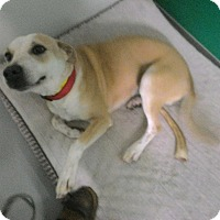 Adopt A Pet :: Dulce - West Hartford, CT