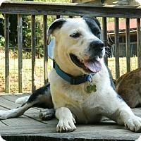 Adopt A Pet :: flinch -$100 - Staunton, VA
