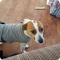 Adopt A Pet :: Jack - Shelter Island, NY