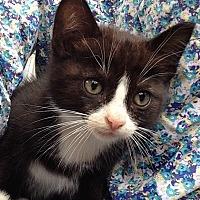 Adopt A Pet :: Tipper - Houston, TX