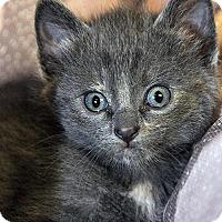 Adopt A Pet :: Tessie=Adoption Pending - Fort Leavenworth, KS