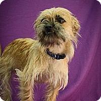 Adopt A Pet :: Heinz - Broomfield, CO