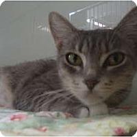 Adopt A Pet :: Cuddles - Winter Haven, FL