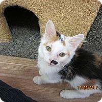Adopt A Pet :: Pretty Girl - Bunnell, FL