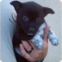 Adopt A Pet :: Rhino - Bakersfield, CA