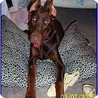 Adopt A Pet :: Putzi - Hamilton, ON