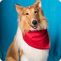 Adopt A Pet :: Aiden - Minneapolis, MN