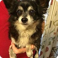 Adopt A Pet :: Pico - Kansas city, MO