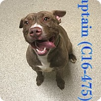Adopt A Pet :: Captain - Tiffin, OH