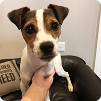 Adopt A Pet :: Dudley - Manhattan, IL