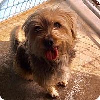 Adopt A Pet :: Jay - Joplin, MO