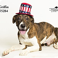 Adopt A Pet :: Griffin - Baton Rouge, LA