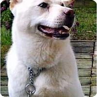 Adopt A Pet :: Sam - West New York, NJ