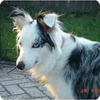 Adopt A Pet :: Kathy - Orlando, FL