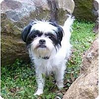 Adopt A Pet :: Miki - Mocksville, NC