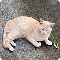 Adopt A Pet :: Charlie - Warren, OH