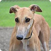 Adopt A Pet :: Sally (Tema) - Chagrin Falls, OH