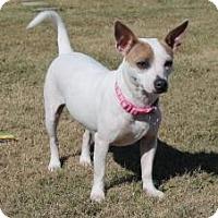 Adopt A Pet :: Jordan in Baytown - Houston, TX