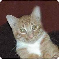 Adopt A Pet :: Casey Girl - Chula Vista, CA
