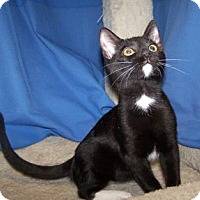 Adopt A Pet :: K-Kenna4-Kramer - Colorado Springs, CO