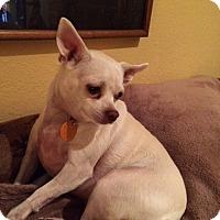 Adopt A Pet :: Leah Rose - Edmond, OK