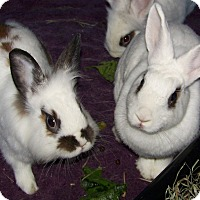 Adopt A Pet :: Ludwig & Plush - Alexandria, VA