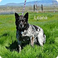Adopt A Pet :: Leana - Yreka, CA