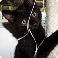 Adopt A Pet :: Pansy - Grants Pass, OR