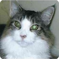 Adopt A Pet :: Trevor - Brea, CA