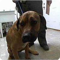 Adopt A Pet :: Garrett - FOSTER NEEDED - Seattle, WA