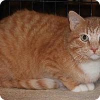 Adopt A Pet :: Rocky BalBoa - Columbus, OH