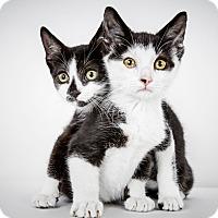 Adopt A Pet :: Nick - New York, NY