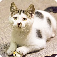 Adopt A Pet :: Eddy - Chicago, IL