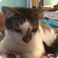 Adopt A Pet :: Oberon - Delmont, PA