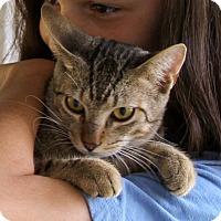 Adopt A Pet :: Jack - Sylvania, GA